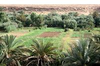 oasis, vacaciones, diversion, marruecos, desierto, erfoud, rissani, marrakech, fez, gargantas de todra, medicina alternativa