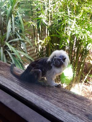 Australian Wild Monkey at Symbio Wildlife Park Sydney