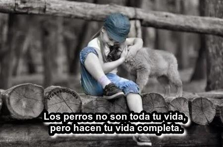 Los perros no son toda tu vida, pero hacen tu vida completa.