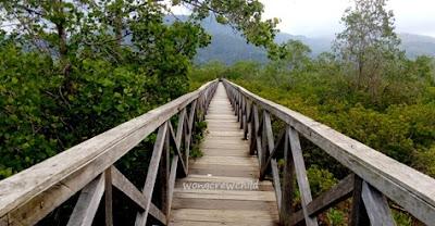 jembatan galau hutan mangrove pantai cengkrong