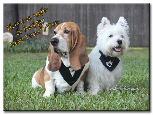 Two tuxedo wearing dogs