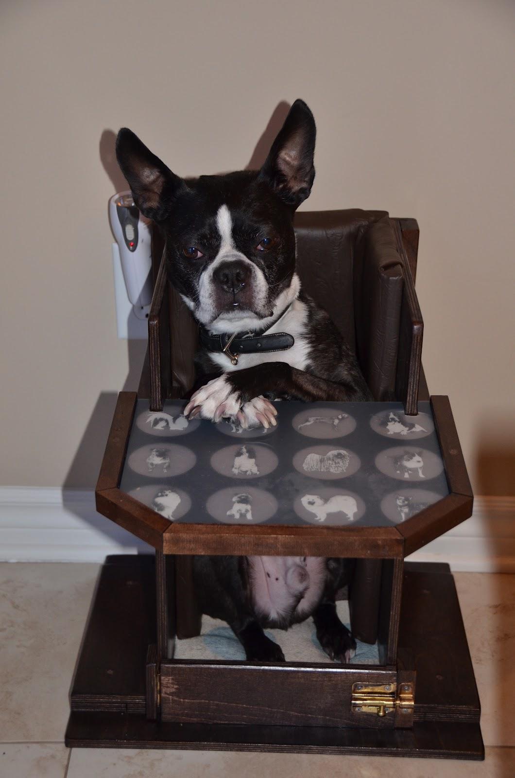Boscoe-Diary of a dog with Megaesophagus