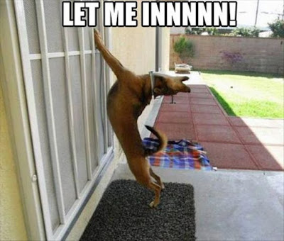Funny Dog Humor : Please let me in