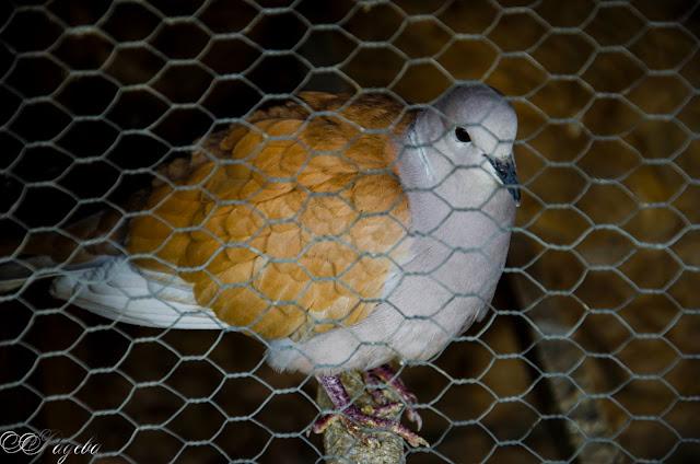 Живот-в-клетка-Life-in-cage