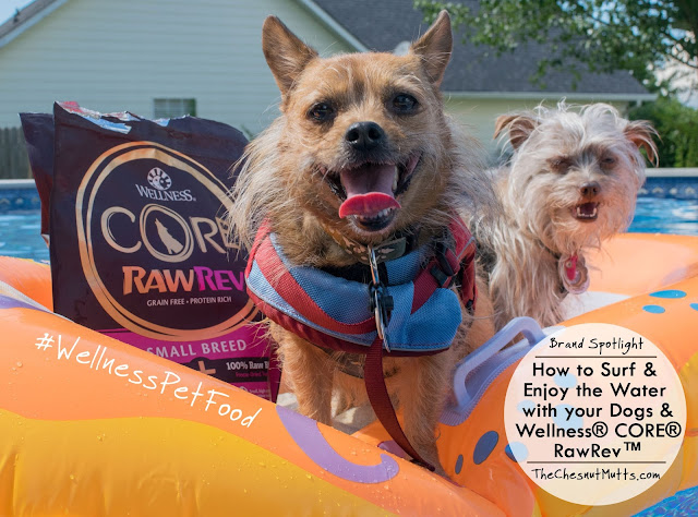 Brand Spotlight: How to Surf & Enjoy the Water with your Dogs & Wellness® CORE® RawRev™