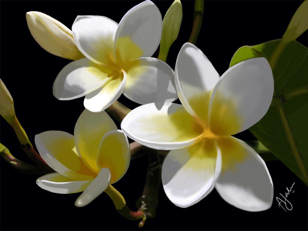 Beautiful: Beautiful Flowers