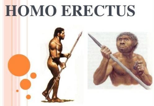 Homo erectus - SEJARAH MANUSIA PURBA DI INDONESIA LENGKAP