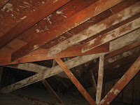 White Mold In Basement White Mold Removal Tips