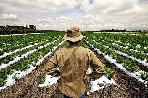 Την Τρίτη η πληρωμή των επιδοτήσεων απο τον ΟΠΕΚΕΠΕ σε πάνω από 600.000 αγρότες