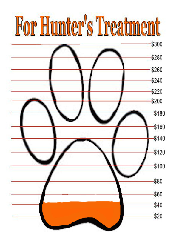 donations for heartworm treatments donation meter
