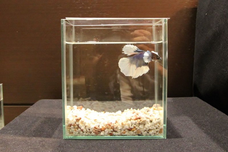 What Has to be Done About Betta Fish Tank with Filter and Heater Before It Is Too Late?