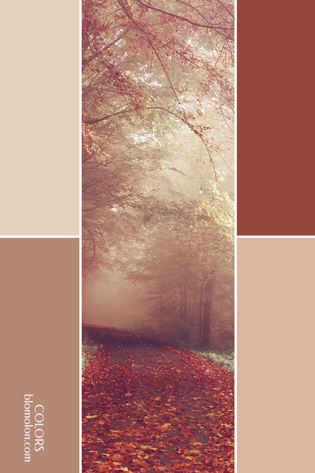 variedad_en_color_combinacion_9