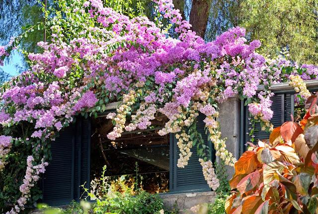 flores que encantam