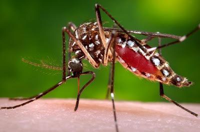 SP tem 'Dia D' de combate ao Aedes aegypti