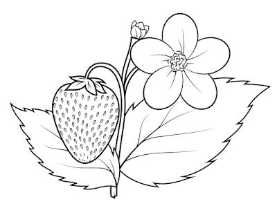 Gambar Mewarnai Buah Strawberry - 6