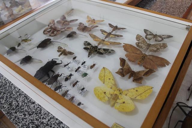 Biólogo monta insetário em Rondônia e doa coleção para ajudar reconstruir Museu Nacional, no Rio