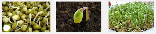Pertumbuhan pada Tumbuhan