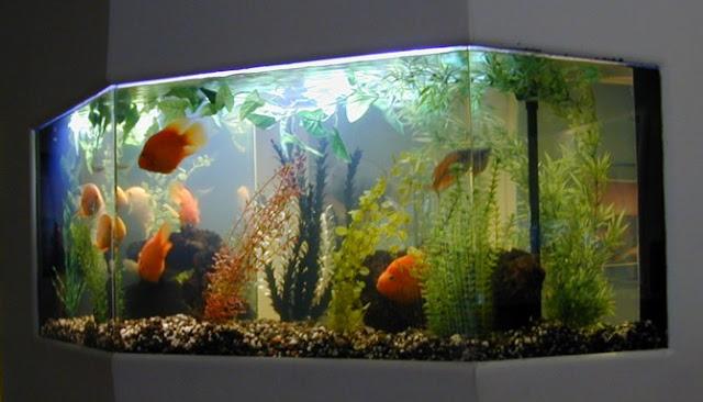 Ini Dia Empat Manfaat Memelihara Ikan Dalam Akuarium Di Rumah