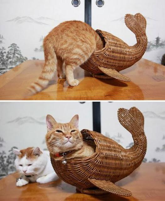 20 chú mèo mặt dày bạ đâu cũng nằm đấy