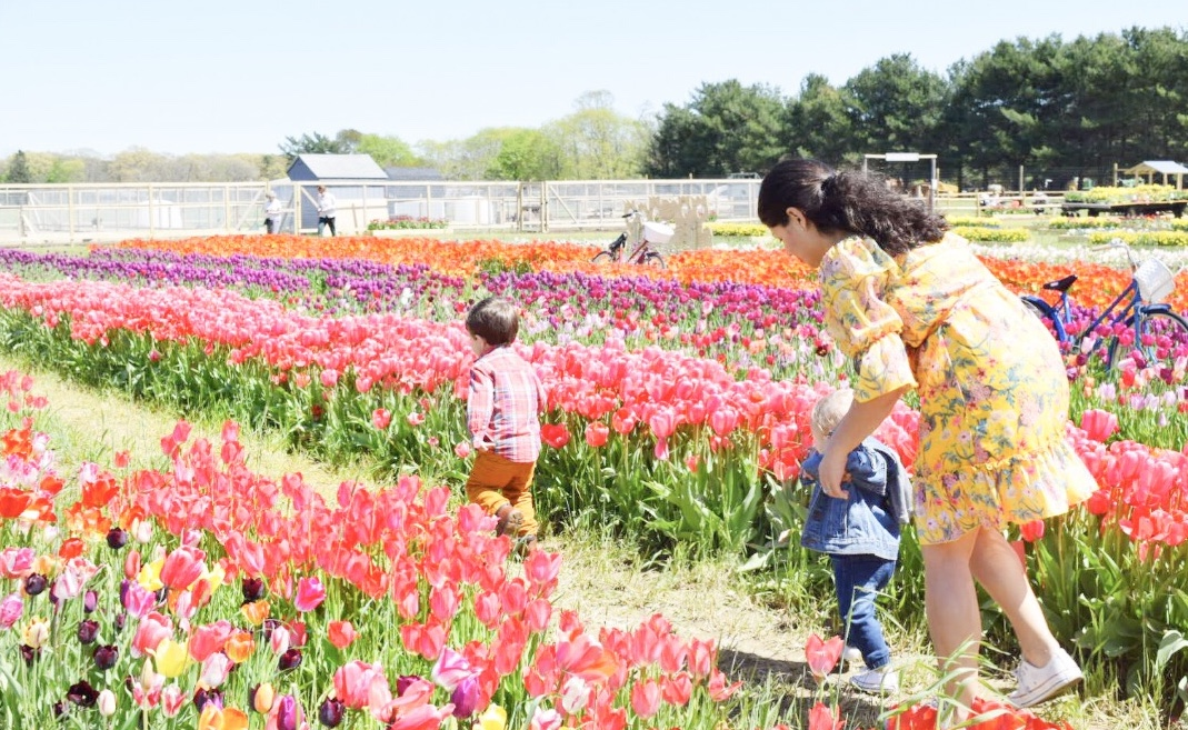 mommy & me, mommy and me, mommy and me photos, photoshoot, tulip festival, tulip photos, family photos