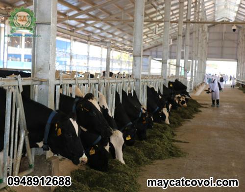 Máy băm cỏ voi cho bò 3A 9Z-9A là sự lựa chọn hàng đầu của các trang trại chăn nuôi bò sữa