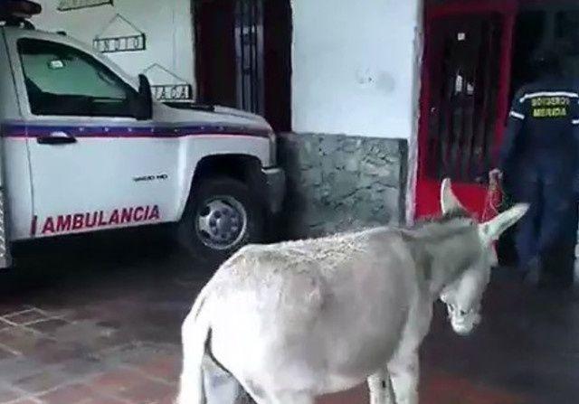 20 años de cárcel para los bomberos que hicieron un video de un burro comparándolo con Maduro