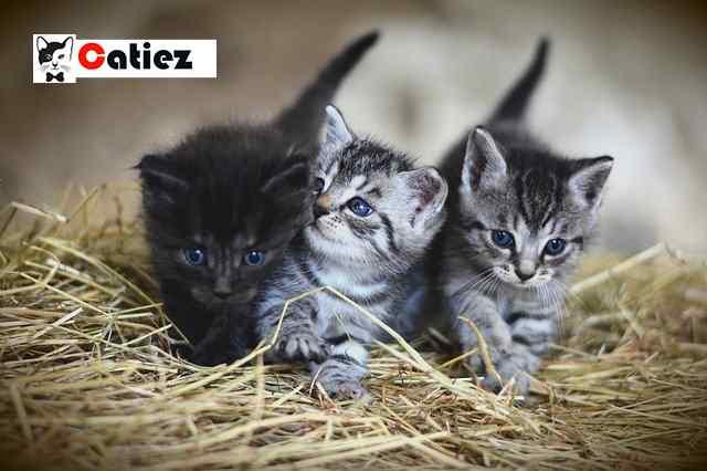 newborn kitten first vet visit