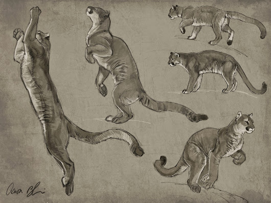 "Doing Cougar studies for my upcoming ""How To Draw Big Cats"" tutorial coming soon."