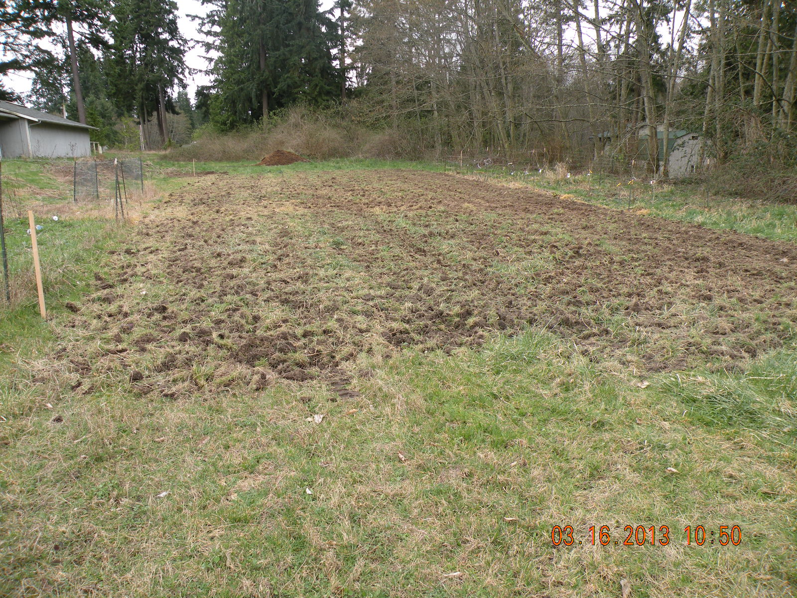 Bufflehead Pond Life On The Farm It S Not All About The