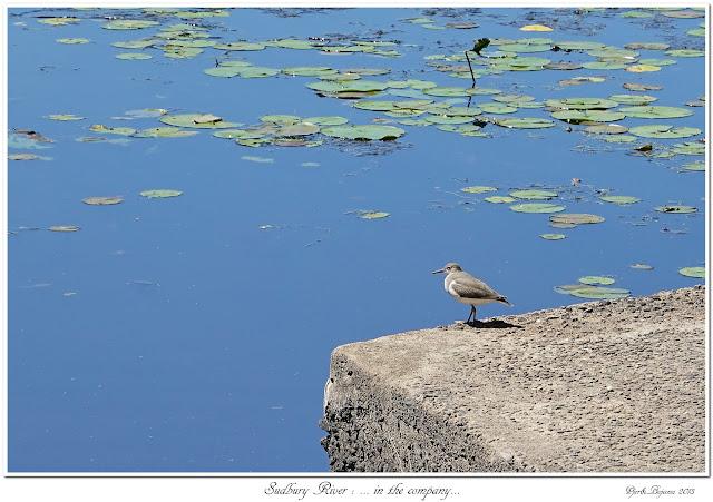 Sudbury River: ... in the company...