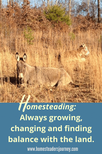 Homesteading for sustainability and for profit
