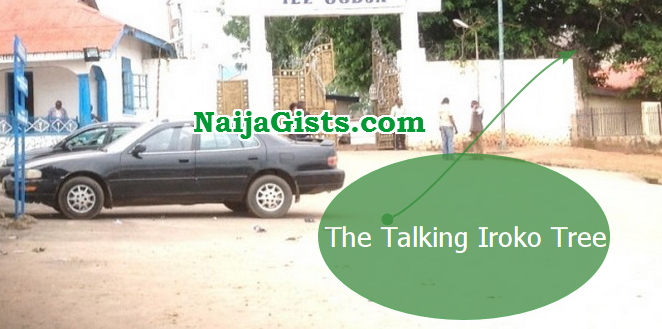talking iroko tree ooni palace