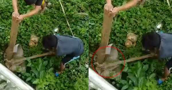 "Two men caught a huge ""looks like a Snake"" hiding inside a box"