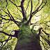 Revelador: 5 Fatos fascinantes sobre a árvore da vida que a religião esconde de toda a humanidade