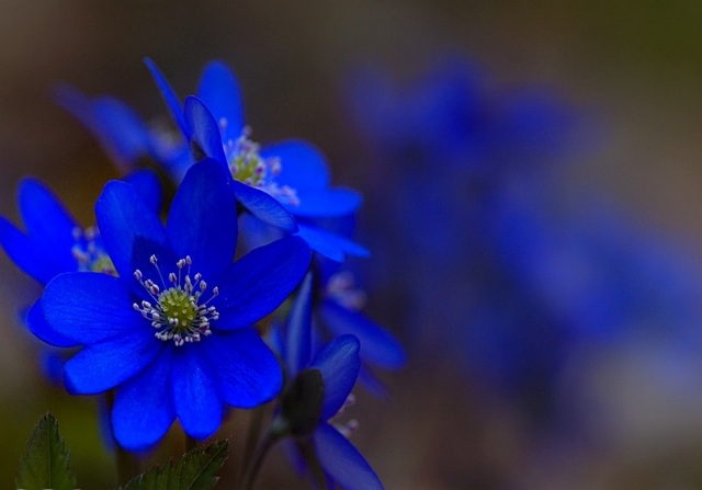 Pretty Pictures Of Blue Flowers