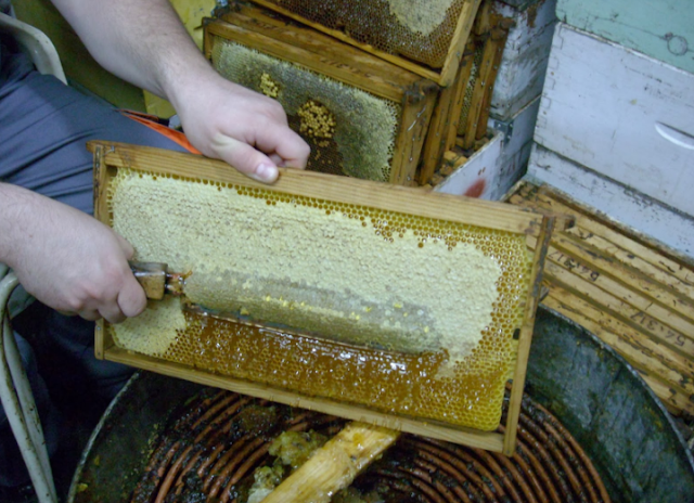 Τρύγος μελισσιών επι τόπου στο μελισσοκομείο χωρίς μεταφορές!