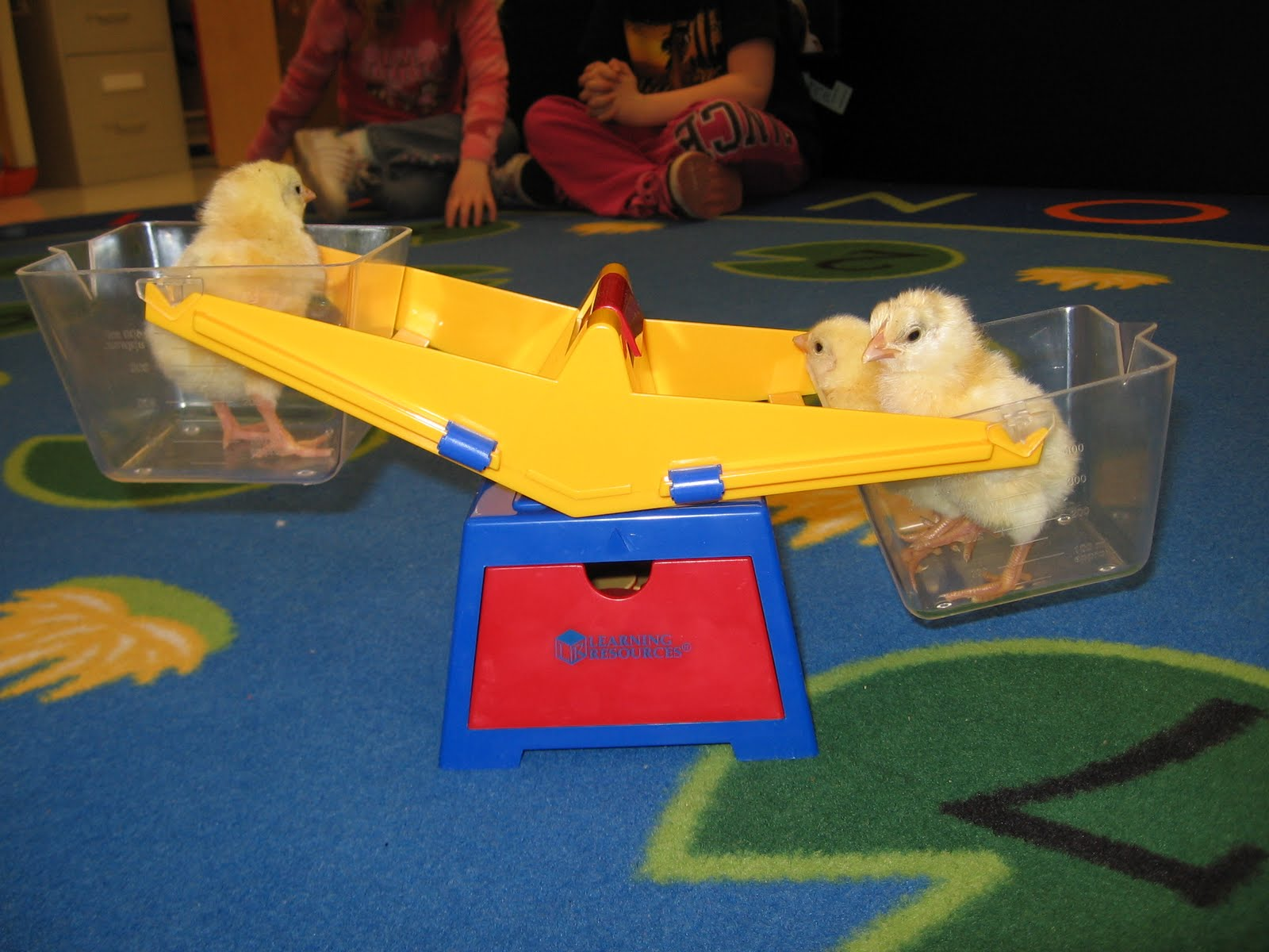 Learn Play Pre K Weighing Chicks