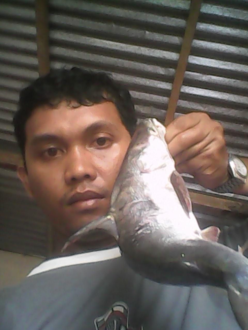 PANGAI GABU - Faridal AR Fishing Blog