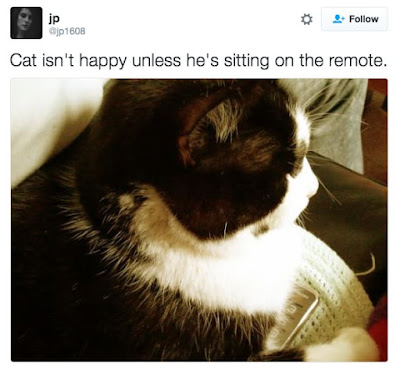 20 incredibly Dickish Things Cats very appear To get pleasure from Doing