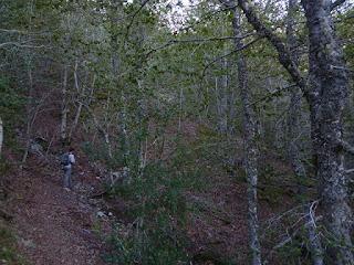 Ascensión por el hayedo. Valle Urbión