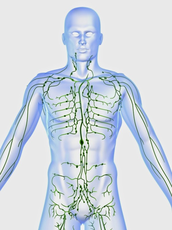 The Importance of the Lymphatic System