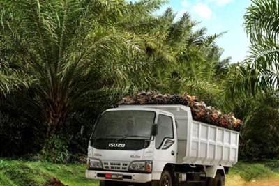Lowongan Perusahaan Perkebunan Kelapa Sawit Di Pekanbaru Mei 2018