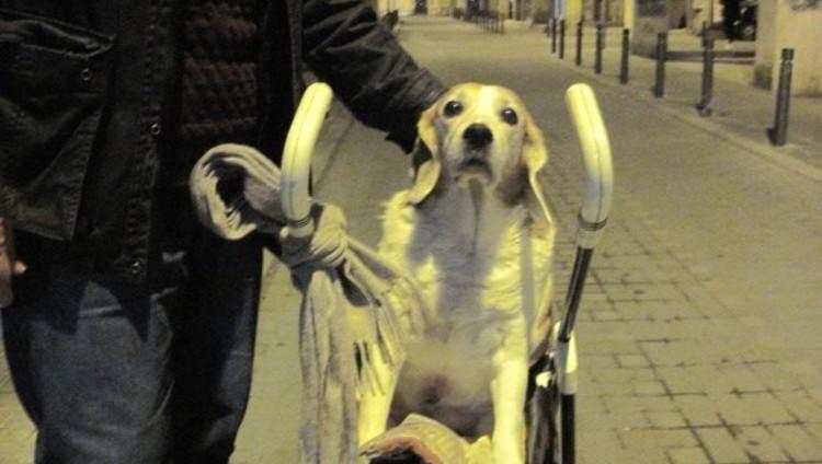 Θεσσαλονίκη: Βγάζει βόλτα την παράλυτη σκυλίτσα του με καροτσάκι μωρού (βίντεο)