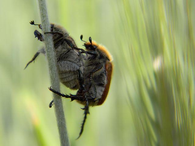 owady, ogrodnica, szkodnik, pole