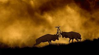 Wildlife-photography-samples