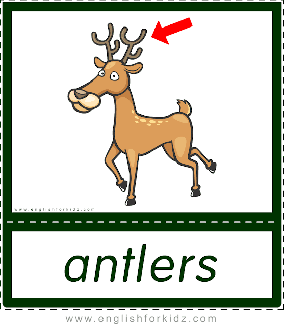 Antlers (deer) - printable animal body parts flashcards for English learners