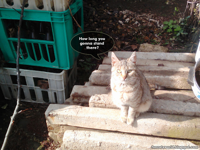 Tigra Cat