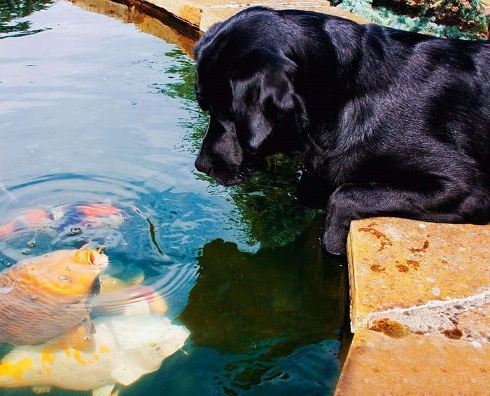 Собаки и рыбки
