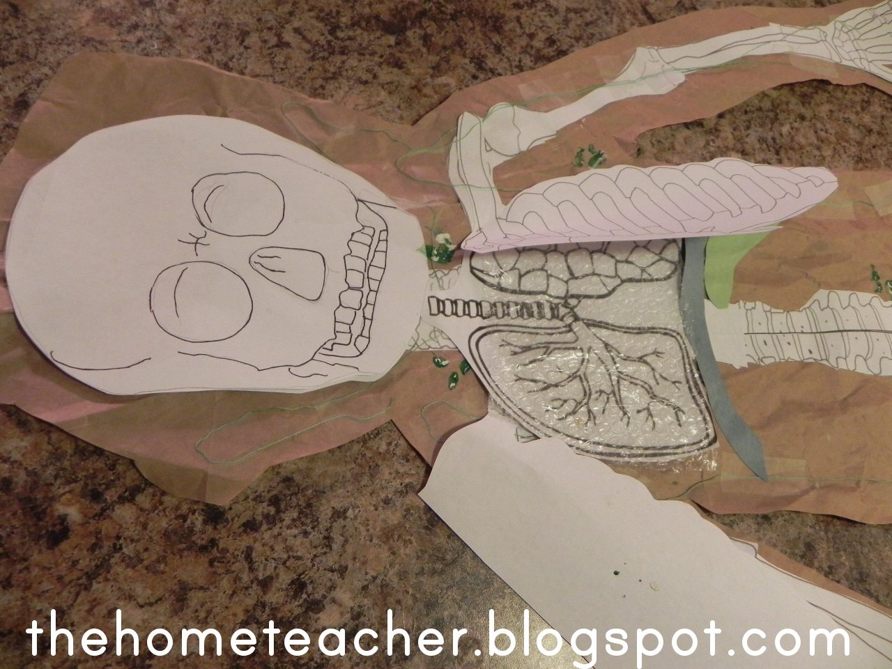 The Home Teacher Human Body Respiratory System
