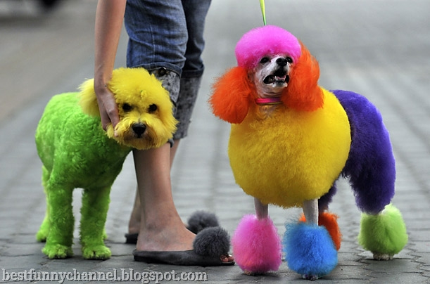 Multicolored dogs